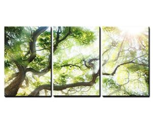 027cc3d964c wall26 – Big Tree with Sun Light – Canvas Art Wall Decor – 16″x24″x3 Panels